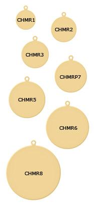CHMR1_Y.jpg